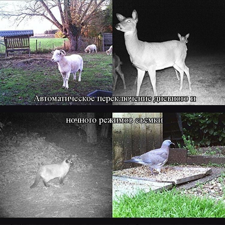 fotolovushka ohotnichja kamera suntek hc 800a 09 - Фотоловушка, охотничья камера Suntek HC-800A - 1080р, 8 Мп CMOS, IP56, определение движения, ночная съемка
