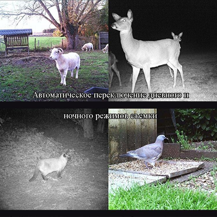 Охотничья камера Photocatcher | фотоловушка HC300M – видео 1080p, 2 ИК-датчика движения, ночное видение, слежение через MMS 218398