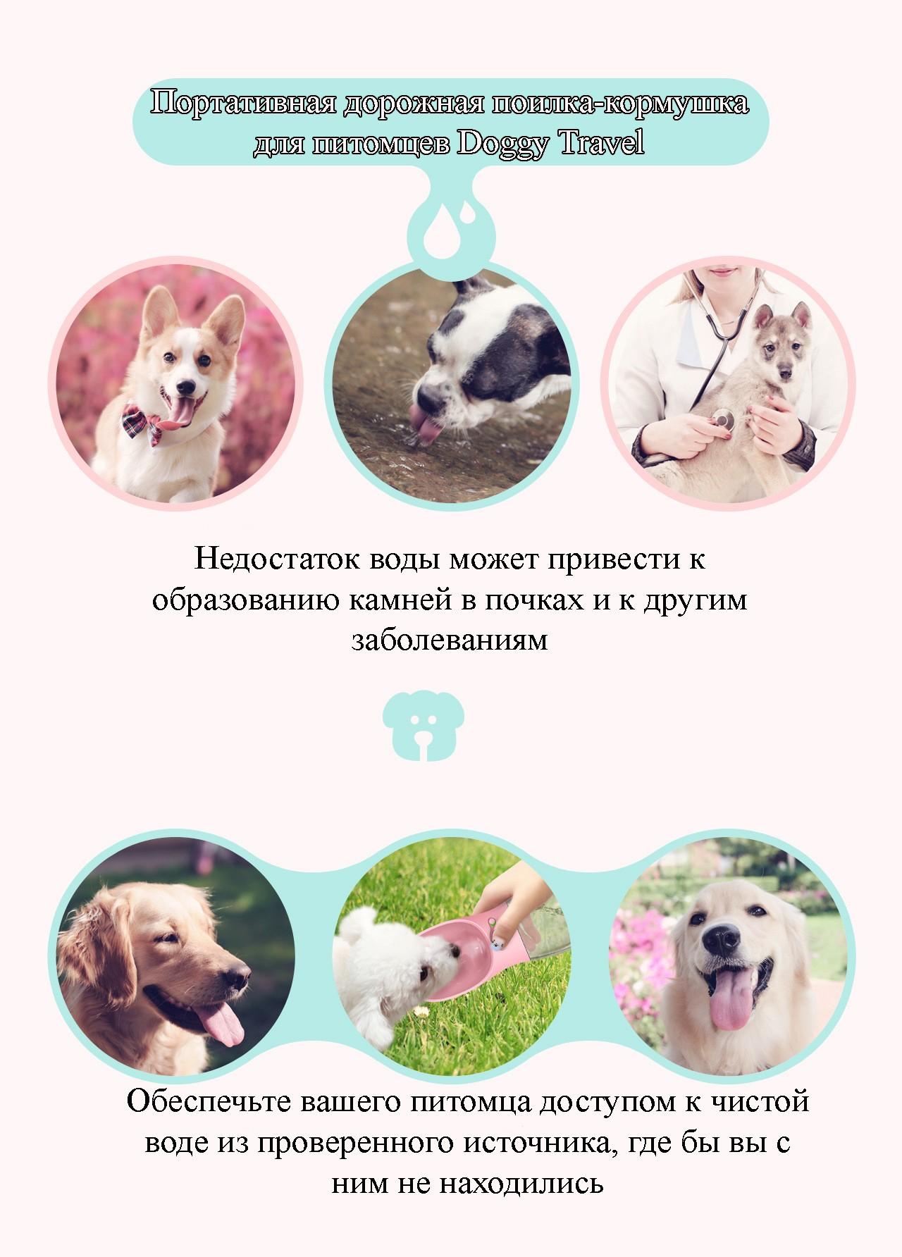 8d37584459e7 40723 - Комплект: Прозрачная сумка-переноска Pet Travel для собак, кошек и  портативная